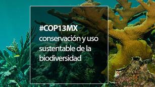 La COP13 impulsará la conservación y uso sustentable de la biodiversidad