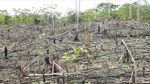 Michoacán firmará un decreto para proteger sus bosques