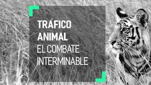 Tráfico ilegal de vida silvestre en casi el 30% de las zonas protegidas a nivel mundial