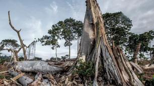 Investigación relaciona al chocolate con la deforestación de parques nacionales africanos