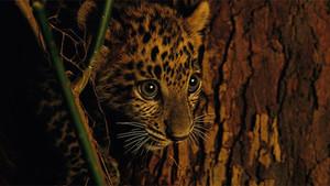Los leopardos se están quedando sin territorio