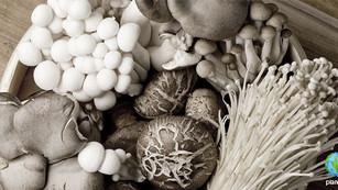 Setas, el 'nuevo' superfood con altos niveles de antioxidantes
