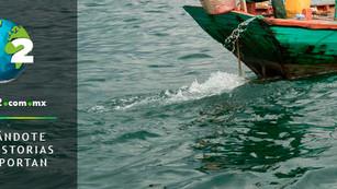 Aumenta pesca ilegal en refugio de vaquita marina: consecuencias ambientales y económicas