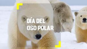 Día Internacional del Oso Polar: protegiendo al gigante blanco