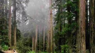 Semarnat, Conafor y organizaciones firman acuerdo para garantizar la preservación de los bosques
