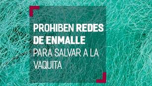 México prohibe redes de enmalle para proteger a la vaquita marina