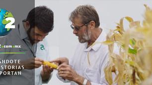 OGM, ¿la solución para el medio ambiente y la hambruna mundial?