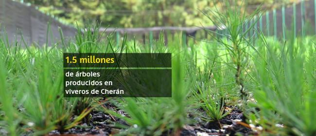 Cherán municipio autónomo reforestación