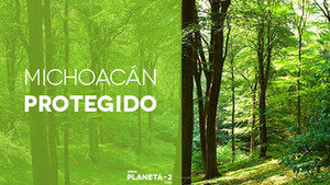 ¡Michoacán protegerá sus bosques!