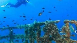 Arrecife artificial del buque 'Uribe 121': un oasis productor de vida