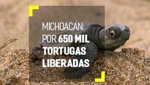 Michoacán planea liberar más de 650 mil tortugas para finales de marzo