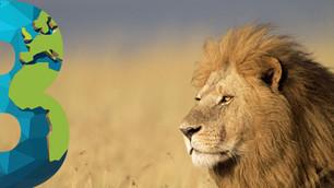 Sudáfrica prohibirá la cría de leones para caza… ¡vaya!