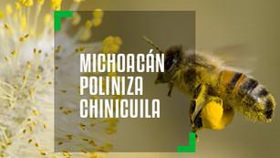 Michoacán instalará 700 colmenas recuperar el ecosistema a través de los polinizadores