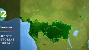 Tala ilegal amenaza a la Selva del Congo