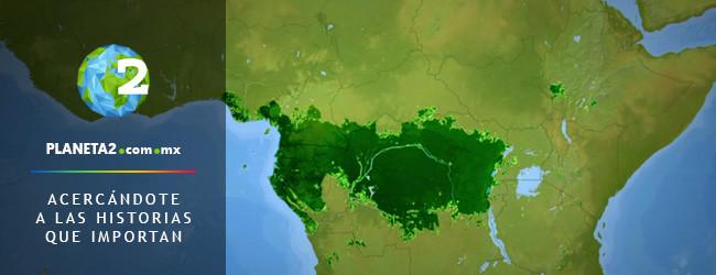 Congo, deforestación, Global Witness