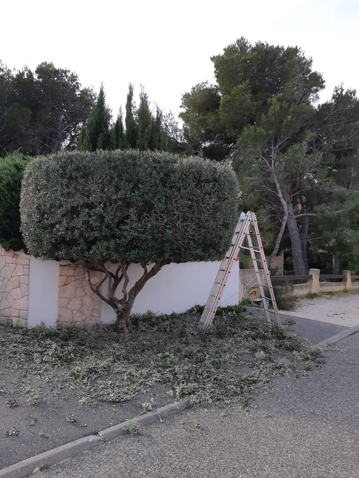 Photos de chantiers/Gémenos/Jardin O Carré