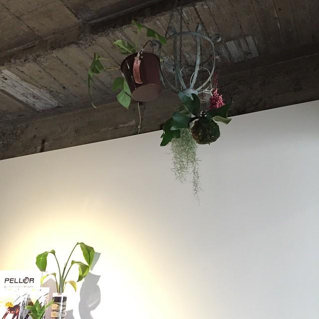 観葉植物をトレーニングジム店内天井からぶら下げる