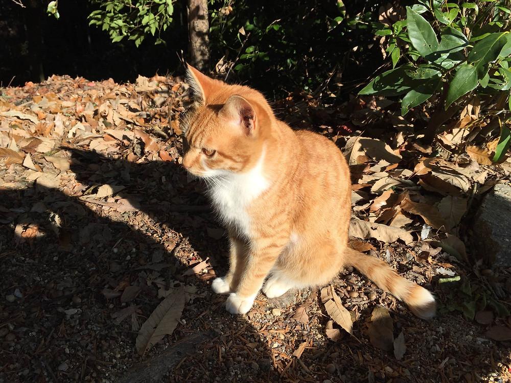 伏見稲荷 猫