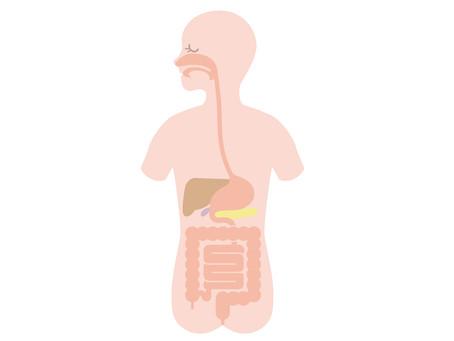 パーソナルトレーニングで内臓強化
