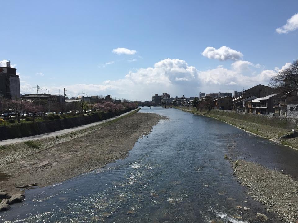 清水五条駅周辺の鴨川沿いの桜