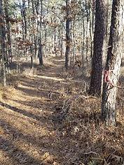 Peconic Trails1.jpg