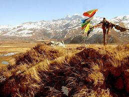 Tibetansk udrensningskur