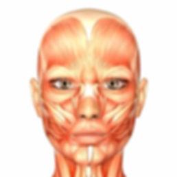 ansigtsyoga-muskler