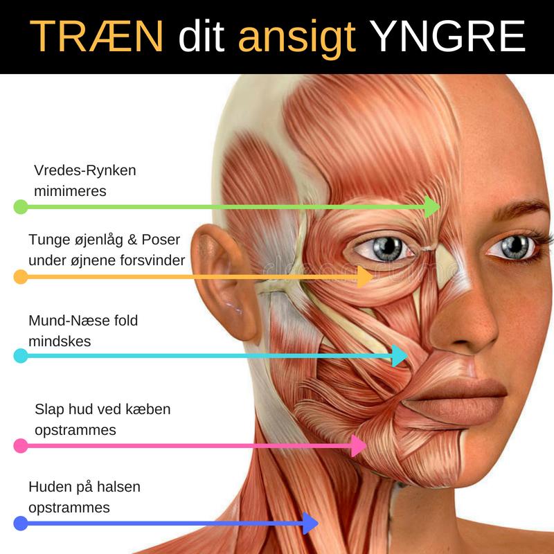 Ved at dyrke ansigtsyoga går det op for dig, hvordan du kan benytte dig af ansigtsmusklernes naturlige funktioner til at få strammet op i huden. Du kan sammenligne ansigtsyoga med en tur i træningscentret. Her strammer du op op og styrker dine muskler effektivt.