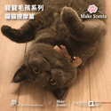 寵寵毛孩系列 - 貓貓按摩篇