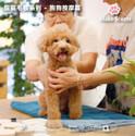 寵寵毛孩系列 - 狗狗按摩篇