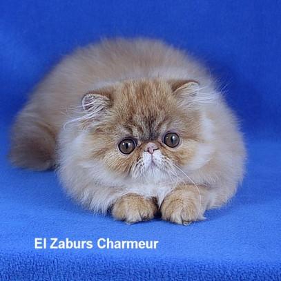 Charmeur (4).jpg