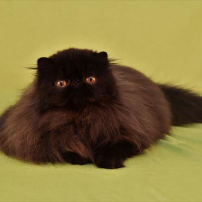 Voksne katte-14.jpg