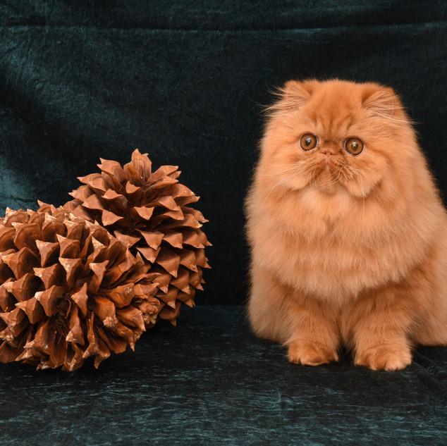 Z  (3) Katte_.jpg
