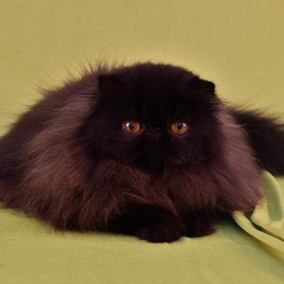 Voksne katte-15.jpg