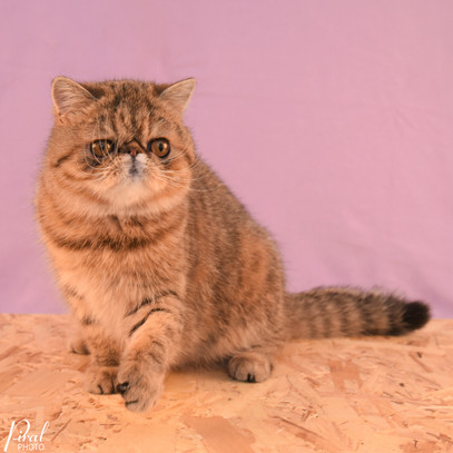 Voksne katte-10.jpg