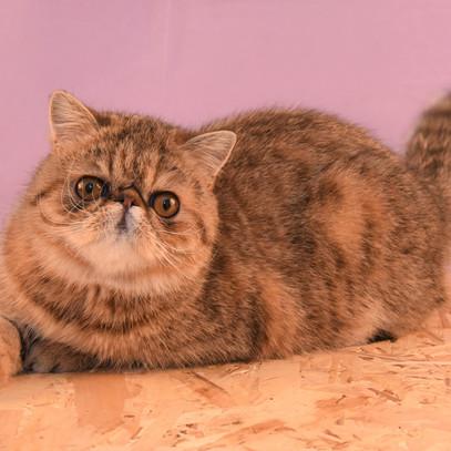 Voksne katte-9.jpg