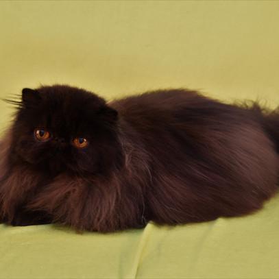Voksne katte-11.jpg