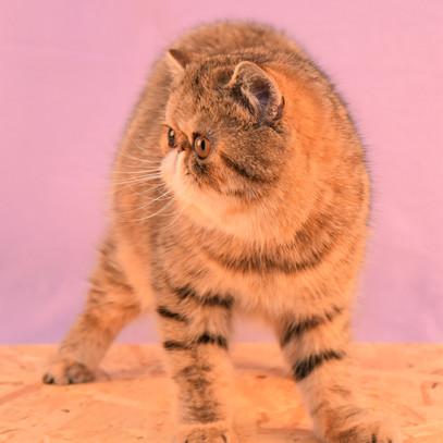 Voksne katte-8.jpg