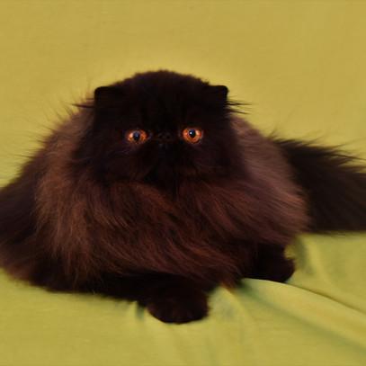 Voksne katte-13.jpg
