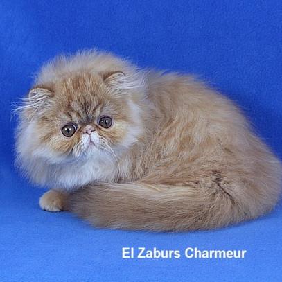 Charmeur (5).jpg