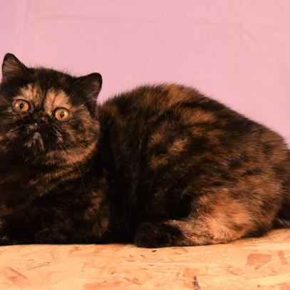 Voksne katte-6.jpg