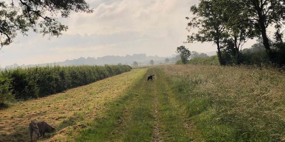 The GROW charity Dog Walk 2020 14th July