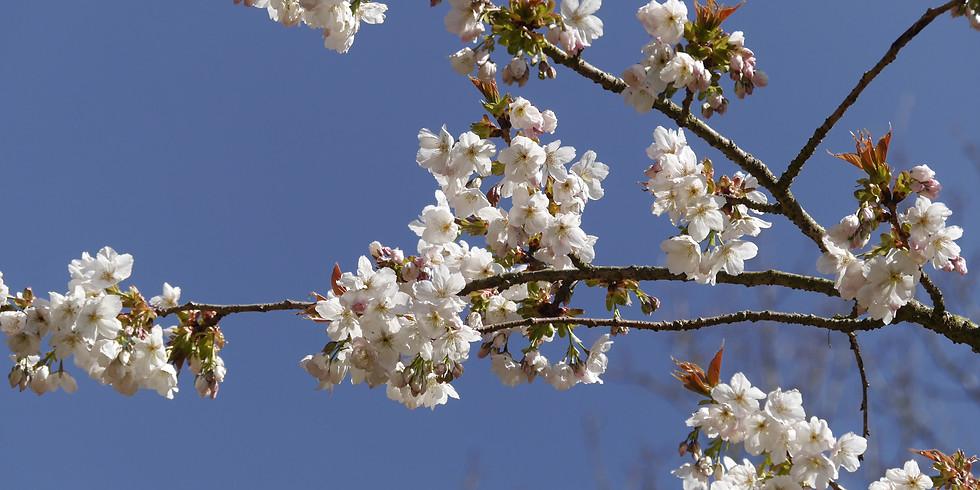 Spring Open Arboretum