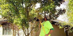 Abes-Tree-Services-Pruning-nklto3aku7s2g