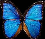 Creative Curriculum Butterfly
