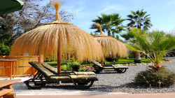 Thatched Parasols & Sun Loungers