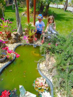 Frog Sanctuary Pond