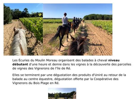 Balade oenologique Niveau Débutant dans les vignes au crépuscule