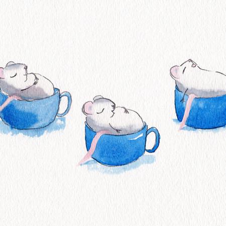 Teacup nap