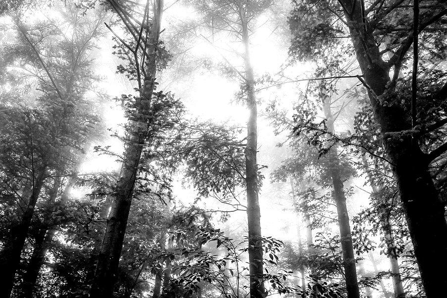 Foggy Forest_edited.jpg